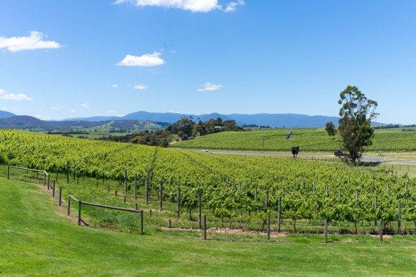 Wine-Yarra-Valley-Australia-6
